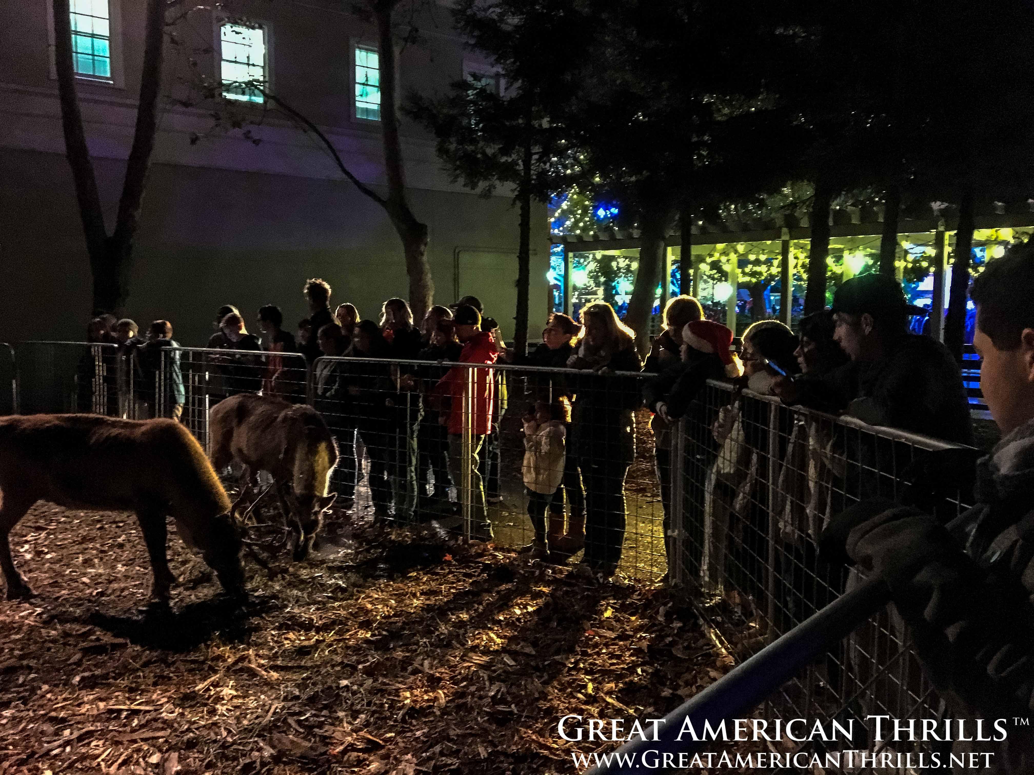 Winterfest Reindeer